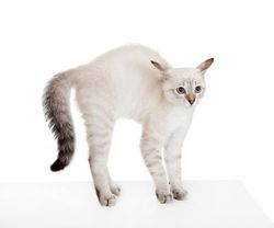 Агресія кішок