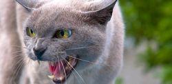 Агресія кішки