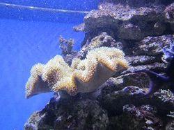 Безхребетні в морському акваріумі
