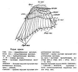 Природне харчування птахів і його замінники в період виходжування