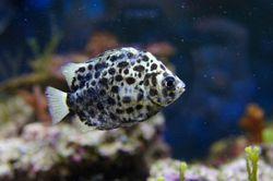 Використання нанотехнології в акваріумістики, при інфекційної патології риб