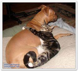 Як кішки люблять один одного?