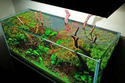 Як забезпечити нормальне і правильне харчування акваріумних рослин