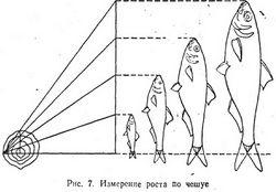 Який рот у риб?