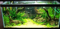 Який світловий період є оптимальним для нормального розвитку рослин в акваріумі?