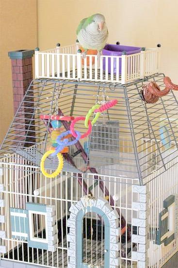 Клітка для птахів і папуг, фото зміст птахів у неволі фотографія картинка