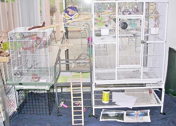 Клітки для птахів, фото зміст птахів папуг фотографія картинка