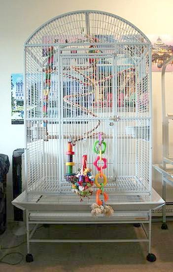 Велика клітка для птахів, фото птиці в неволі фотографія картинка
