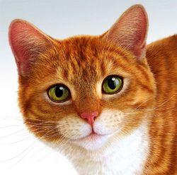 Клички кішок. ц - кішки