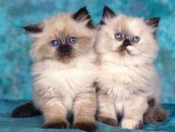 Клички кішок. х - кішки