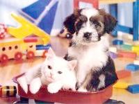Щеня і білий кіт, прикольне фото смішна картинка