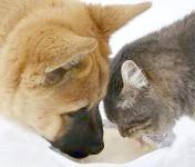 Щеня і кошеня хлебтають молоко з однієї миски, прикольне фото смішна картинка