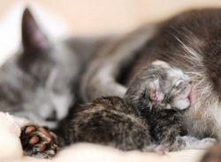 Кошенята і молозиво