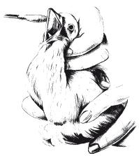 Недорозвинення яєчника у голубів
