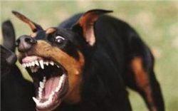 Несподівана агресія собаки