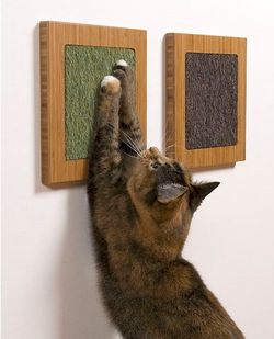 Оббризкування у кішок (мітки котів)