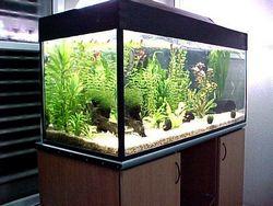 Освітлення акваріума: спектр та інтенсивність