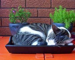 Відмова кішки користуватися лотком