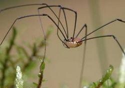 Загін: arachnida lamarck, 1801 = павукоподібні, або арахніди