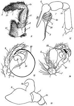 Загін atypidae = скорпіони