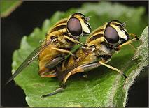Загін: diptera linnaeus, 1758 = двокрилі, або комарі і мухи