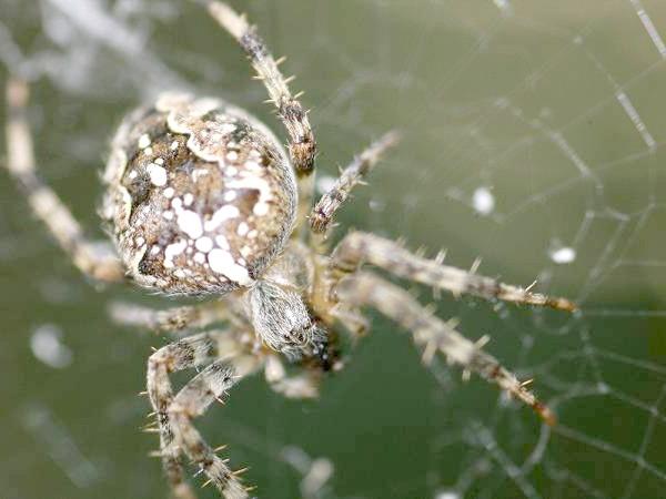 Павук, фото членистоногі тварини фотографія
