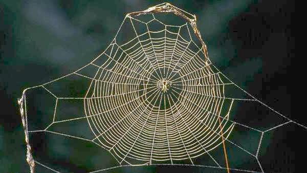 Павукова павутина, фото павукоподібні тварини фотографія