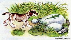 Перша полювання (в.в.біанкі)