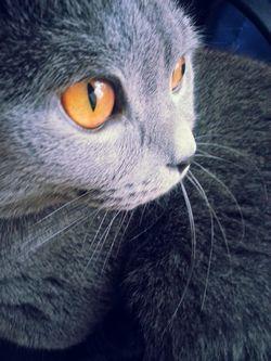 Чому кішка перевертається на спину при вашому наближенні?