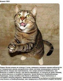 Чому деякі кішки підстрибують на задніх лапах, вітаючи своїх господарів?
