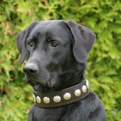 Породи собак на букву г
