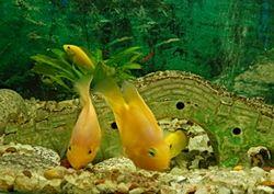 Правила утримання акваріумних рослин