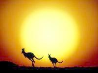 Силуети кенгуру на заході, фото шпалери, фотографія картинка