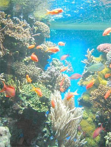 Морський акваріум, фото догляд зміст акваріума фотографія