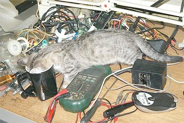 Цікава кішка, фото поведінка кішки фотографія