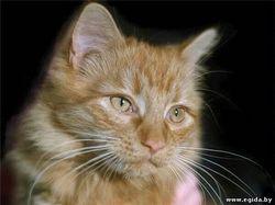 Що означає, коли кішка вмивається черезчуp усередині?