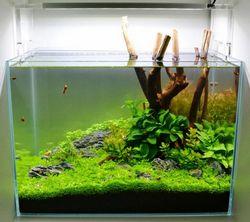 Що являє собою грунт для водних рослин в акваріумі?