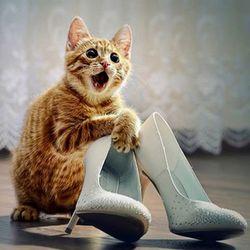 Що зробити, щоб кіт не метил?