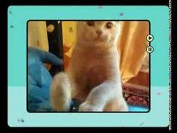 Ю - коти