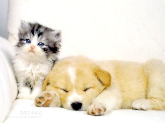 Щеня і кошеня на білому дивані, прикольне фото смішна картинка