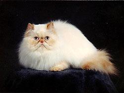 Синдром альфа-кішки