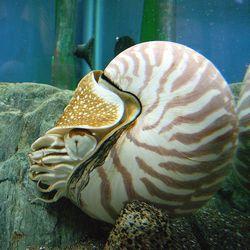 Тип: mollusca linnaeus, 1758 = молюски, м'якотілі