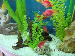 Прикраса акваріума штучними рослинами